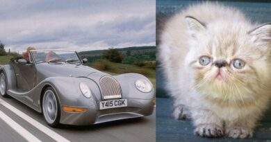 hayvanlara benzeyen arabalar